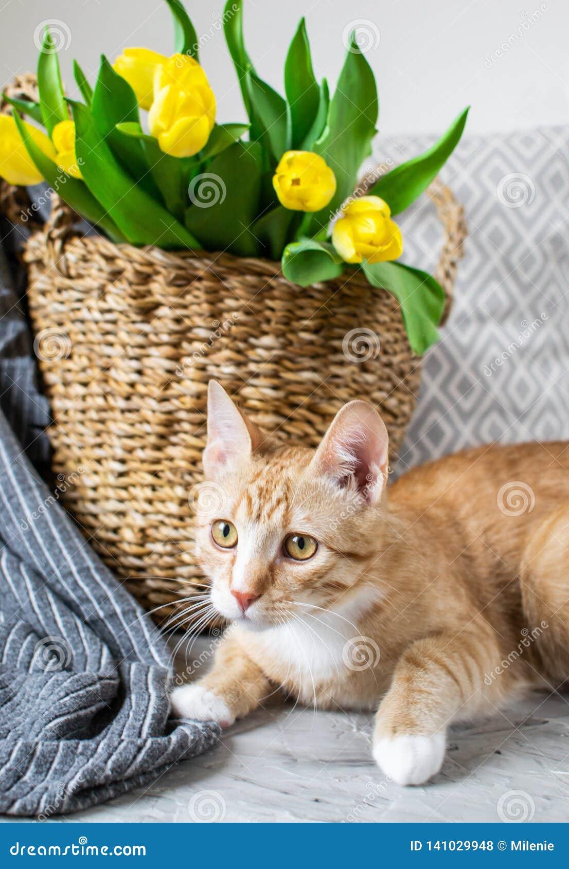 Cat Lying em Gray Plaid Indoor, Cosiness