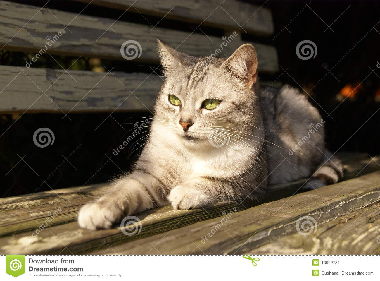 Magnificent Cat Lying On The Garden Bench Stock Image Image Of Nature Inzonedesignstudio Interior Chair Design Inzonedesignstudiocom
