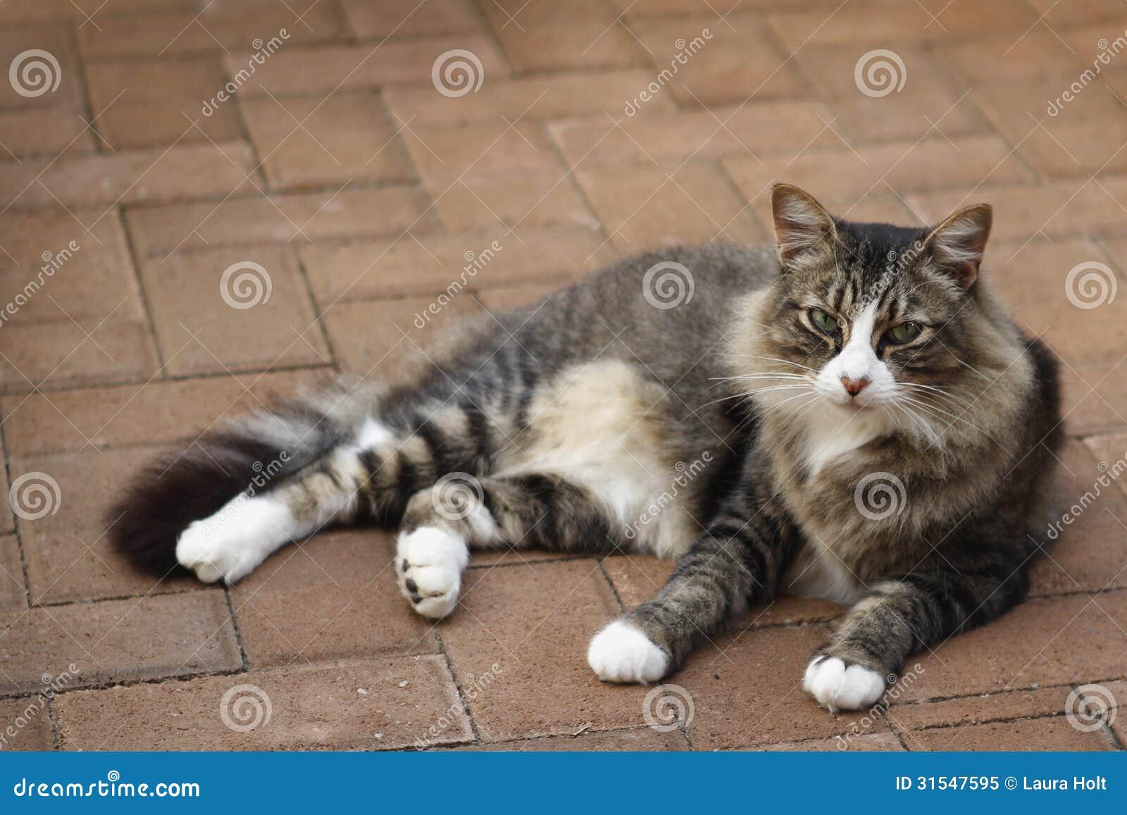 Cat Lying Outdoors auf der Ziegelstein-Pflasterung