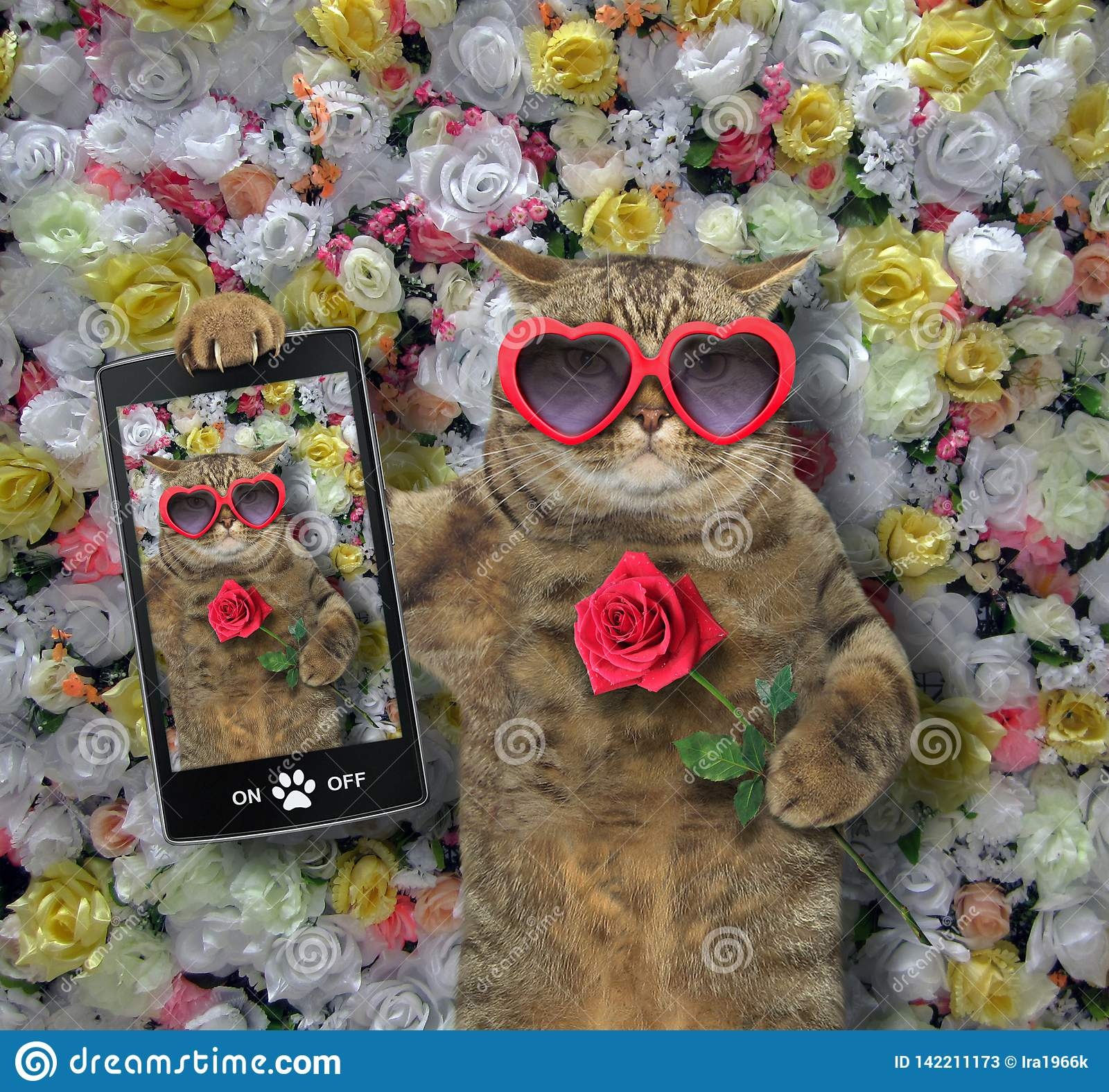 Cat made a selfie with a rose