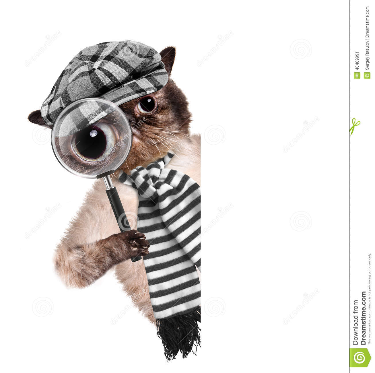Cat with magnifying glass and searching. Creative.