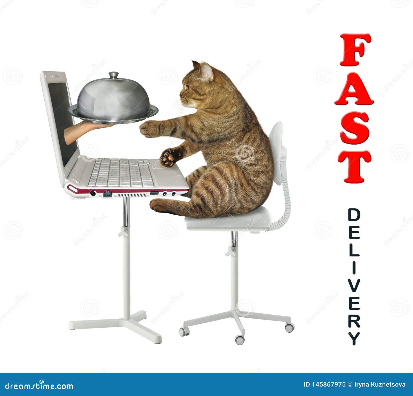 Cat orders food online 2