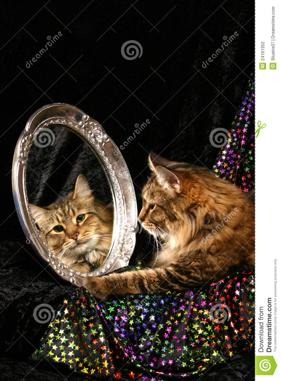 Cat In A Mirror Stock Photo Image Of Green Stripes