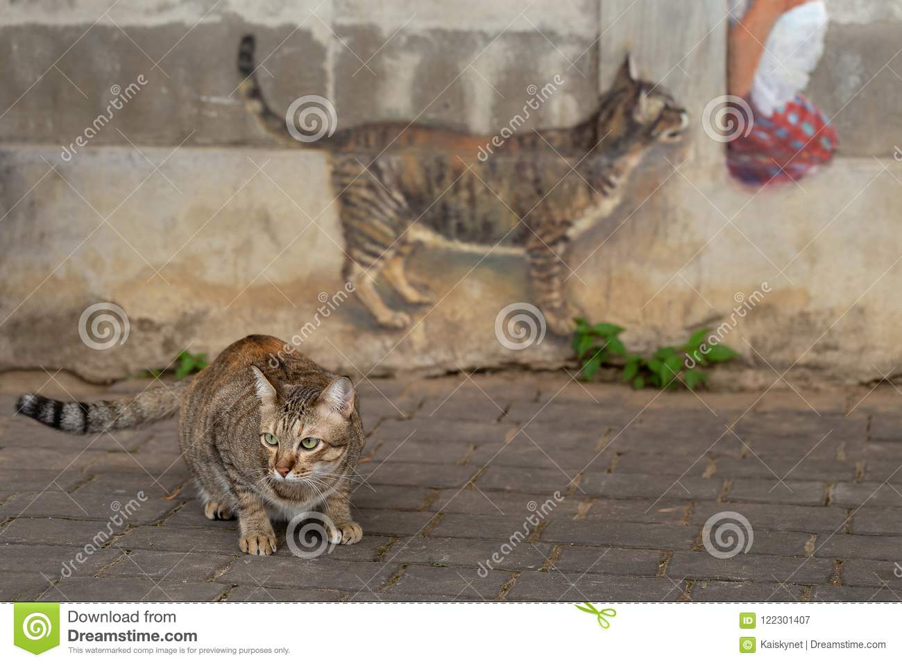 Cat Model And A Cat Painting On The Wall Stock Image Image Of Wall