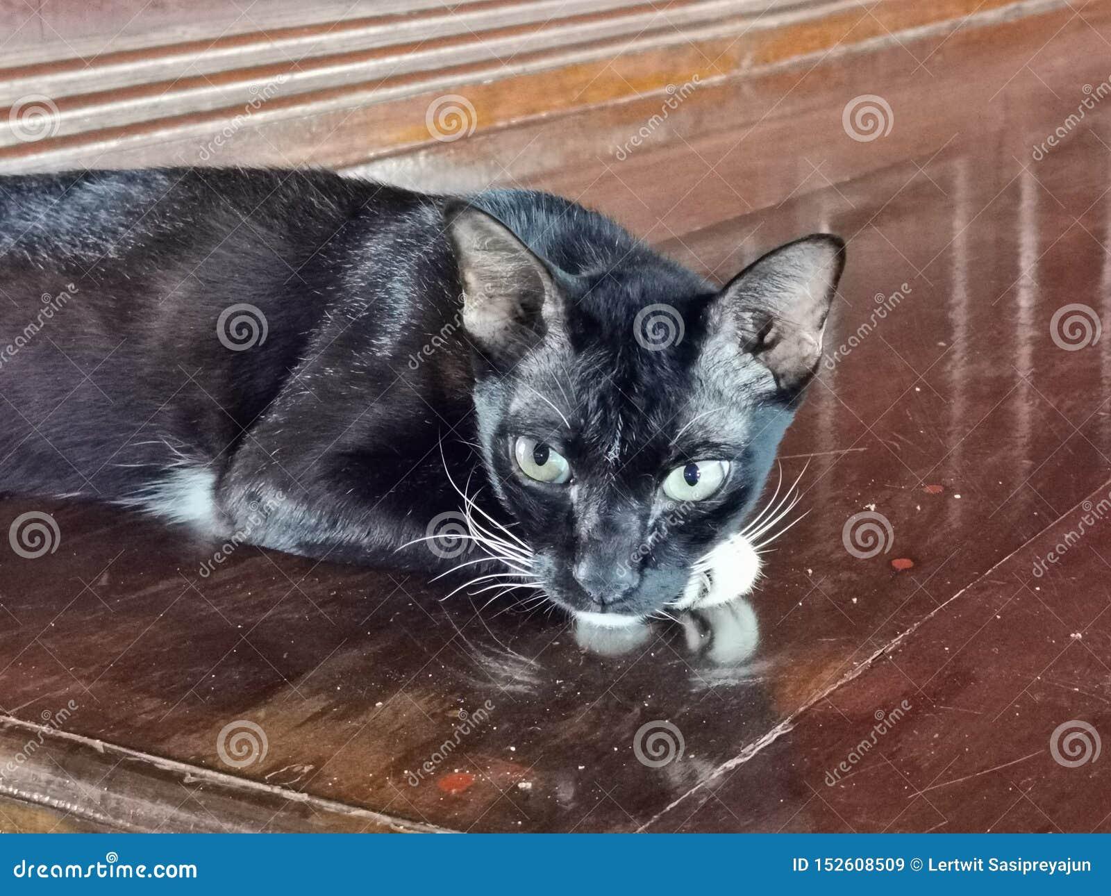 Domestic pet, cat