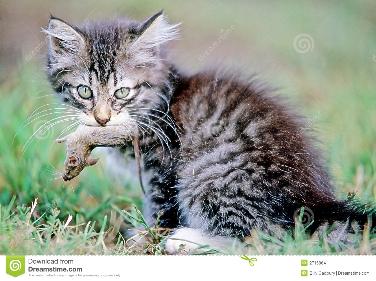 Cat And Mouse Stock Images - Image: 2716864