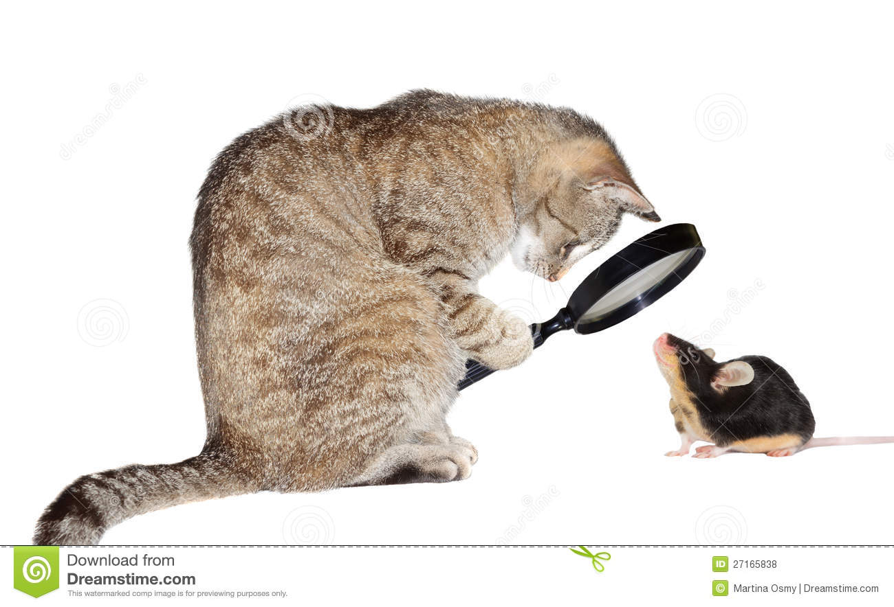 Humorous conceptual image of a nearsighted cat with myopia peering at ...