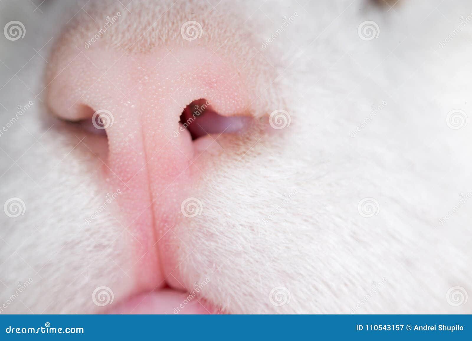 Cat Nose Makro
