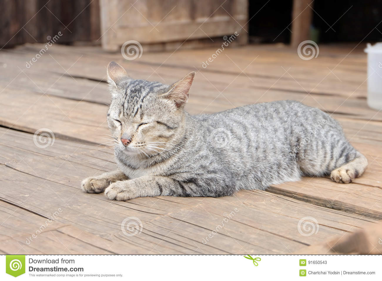 cat one the bamboo floor stock image image of thai forest 91650543 rh dreamstime com