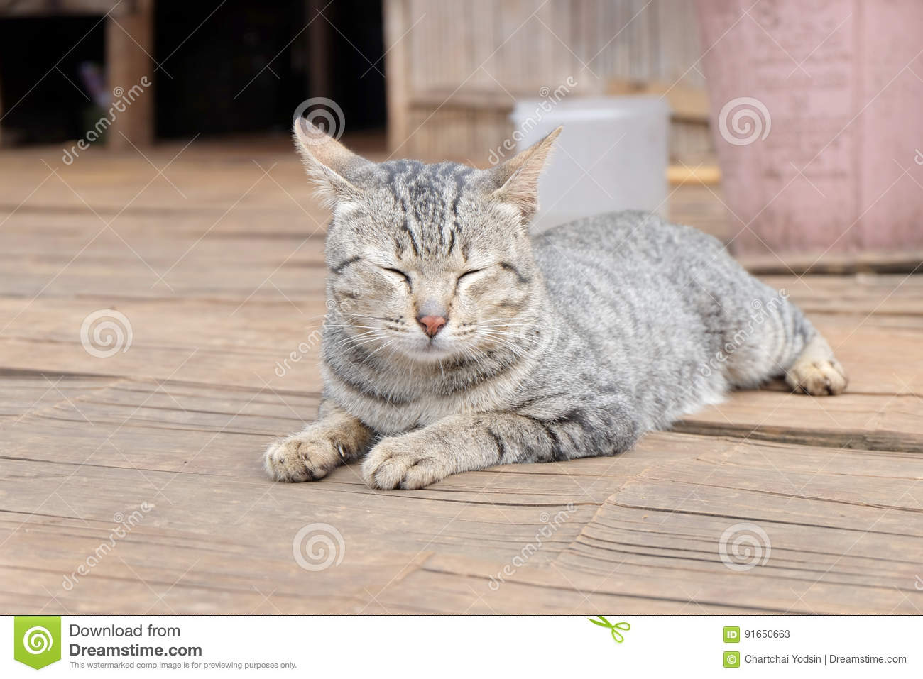 Pleasant Cat One The Bamboo Floor Stock Image Image Of Wildlife Home Interior And Landscaping Synyenasavecom