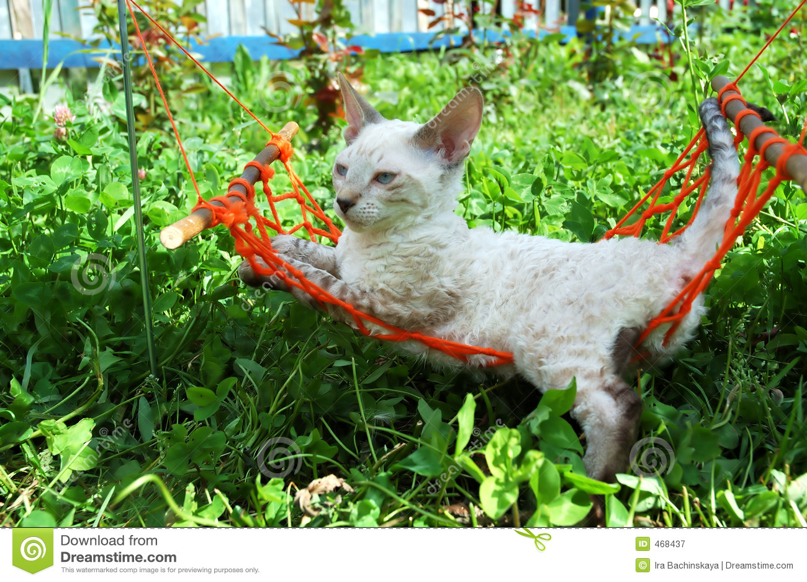 Cat in orange hammock