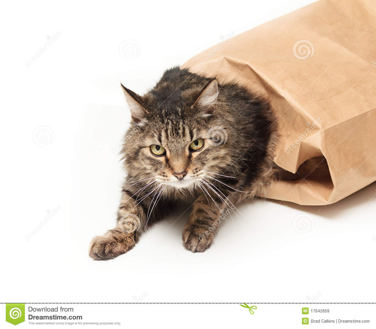 cat is out of the bag Cat out of the bag has 10 ratings and 1 review ryan said: did kirandip see a cat stretched out of ms wenston's house what can you hear what can she h.