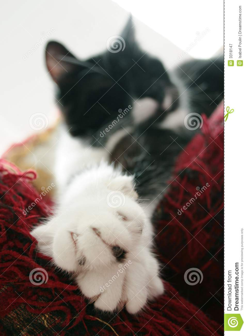 Cat outstretched on sofa