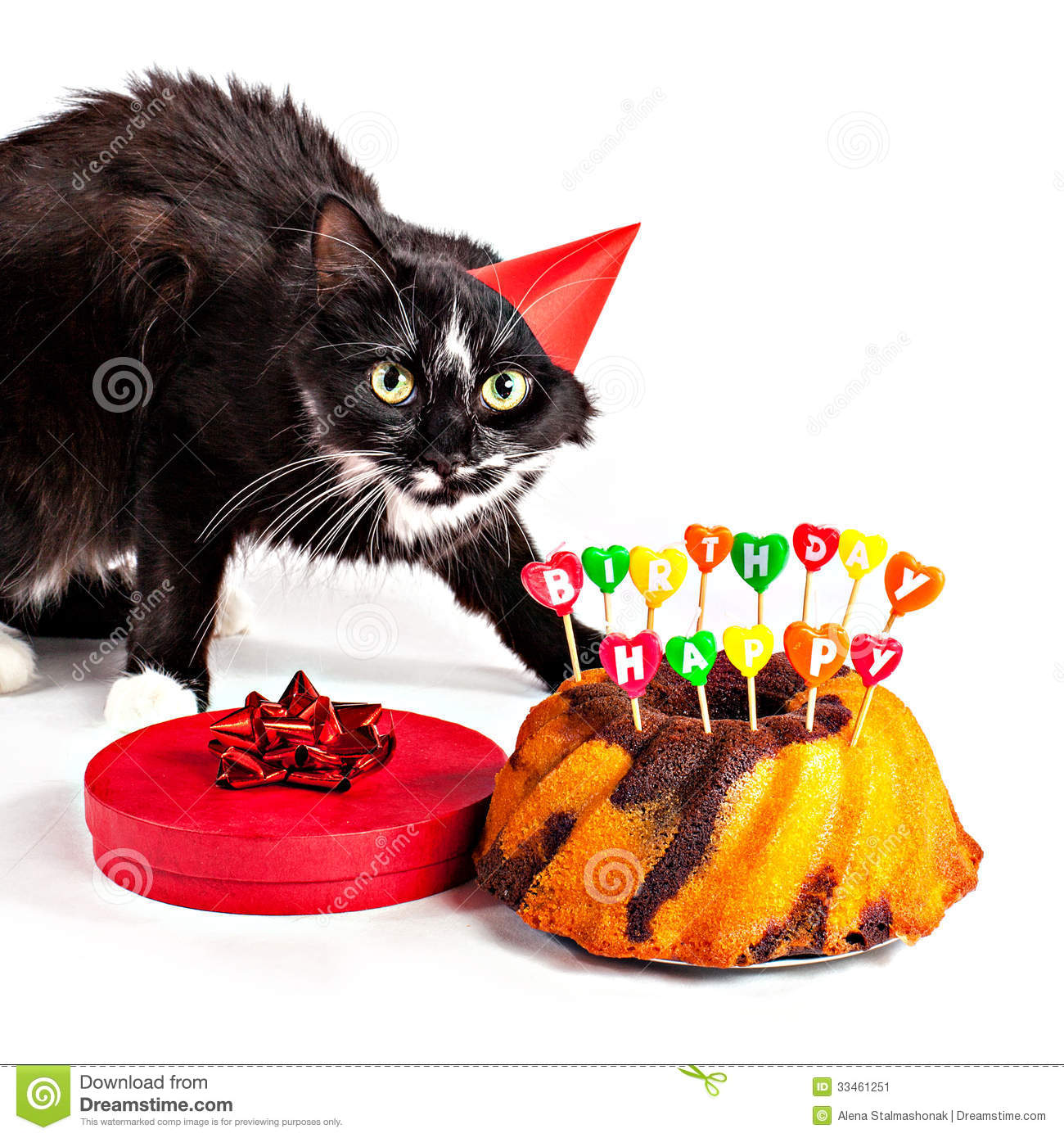 Cat With Party Hat And Birthday Gifts