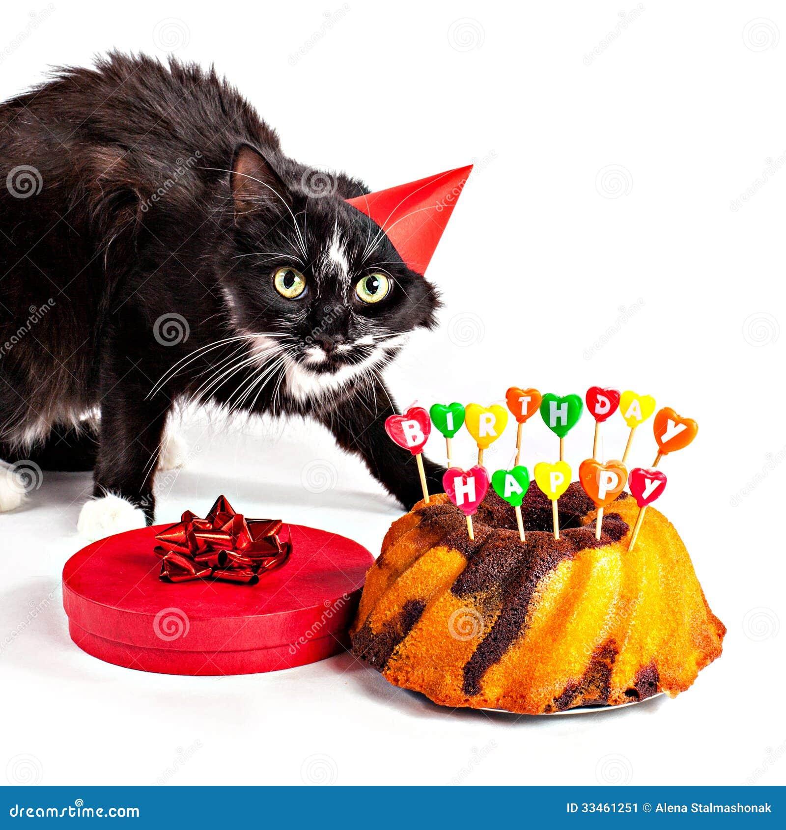 cat with dandruff
