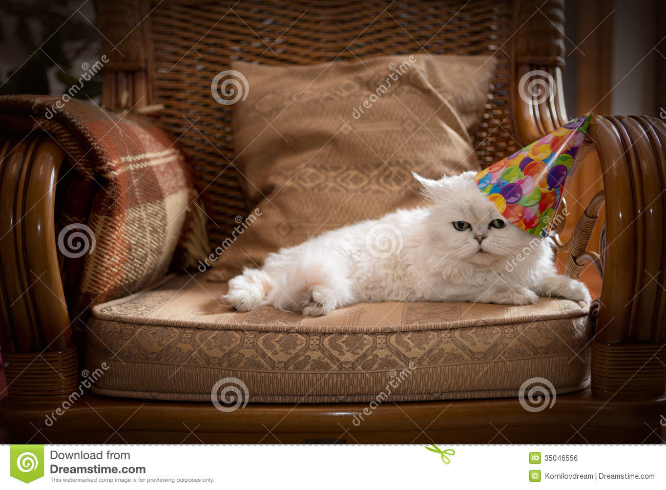 Cat In Party Hat Royalty Free Stock Image Image 35046556