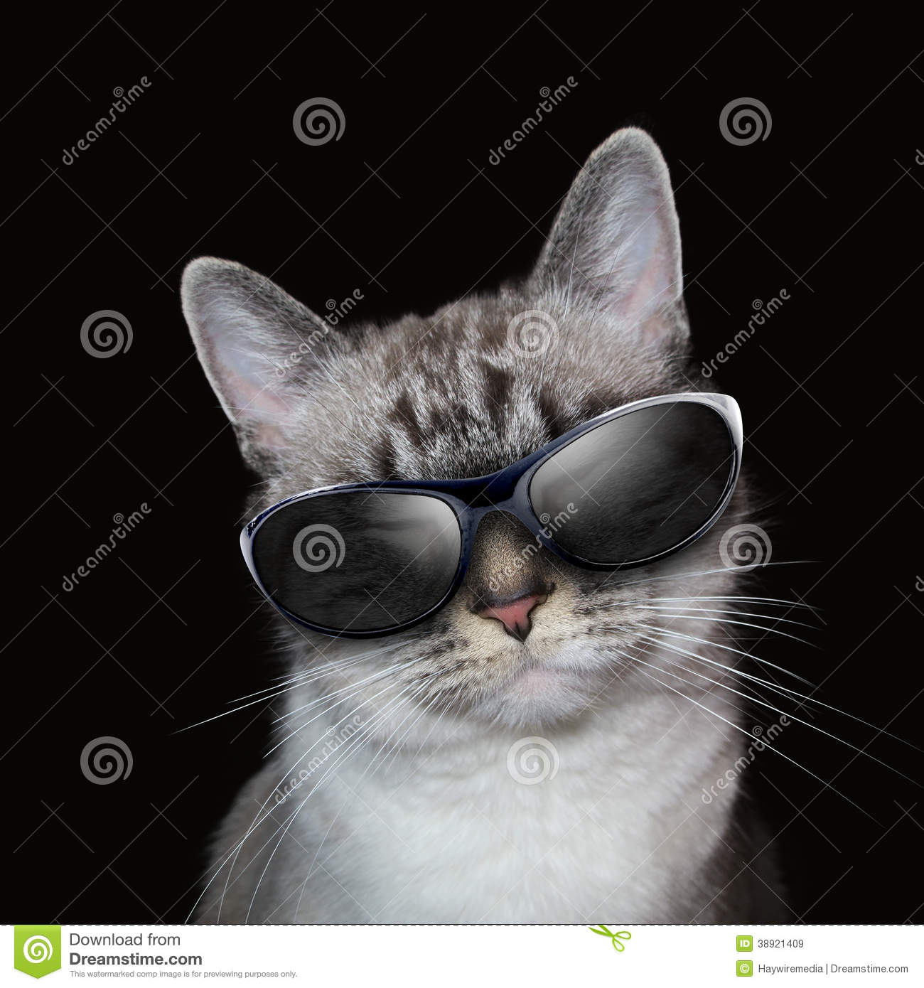 Cat With Party Sunglasses blanca fresca en negro