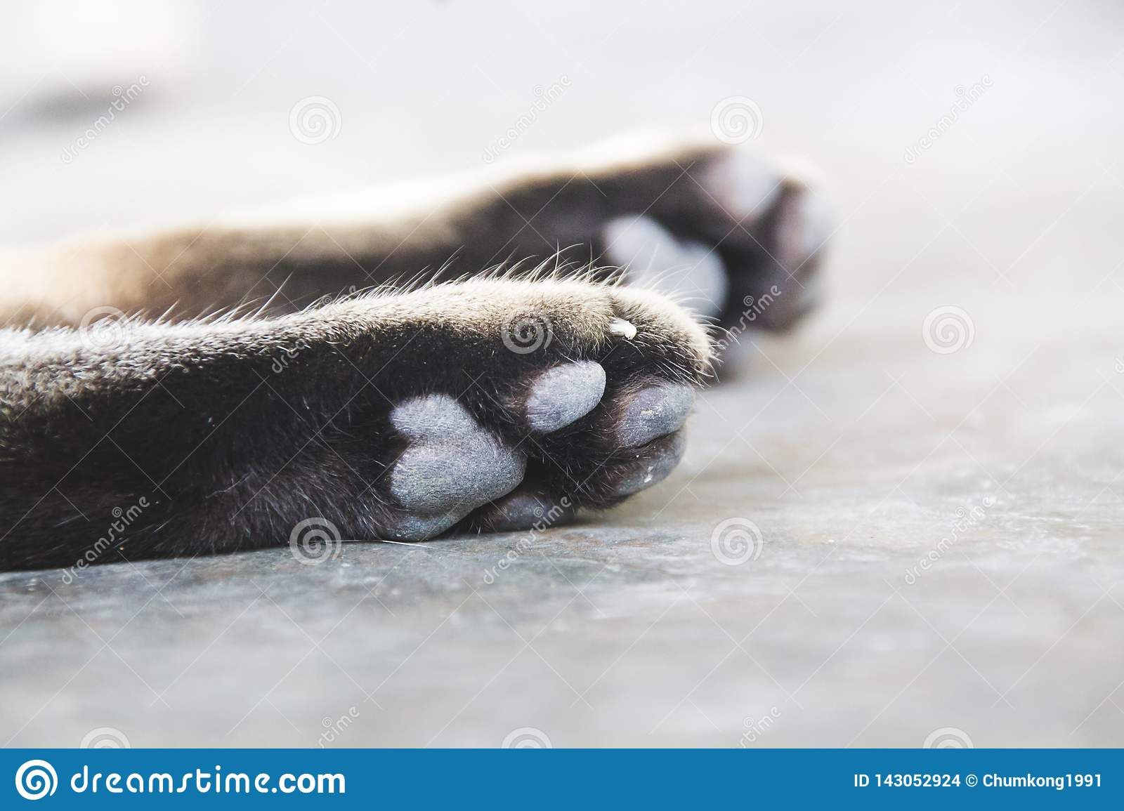 Cat is paws.