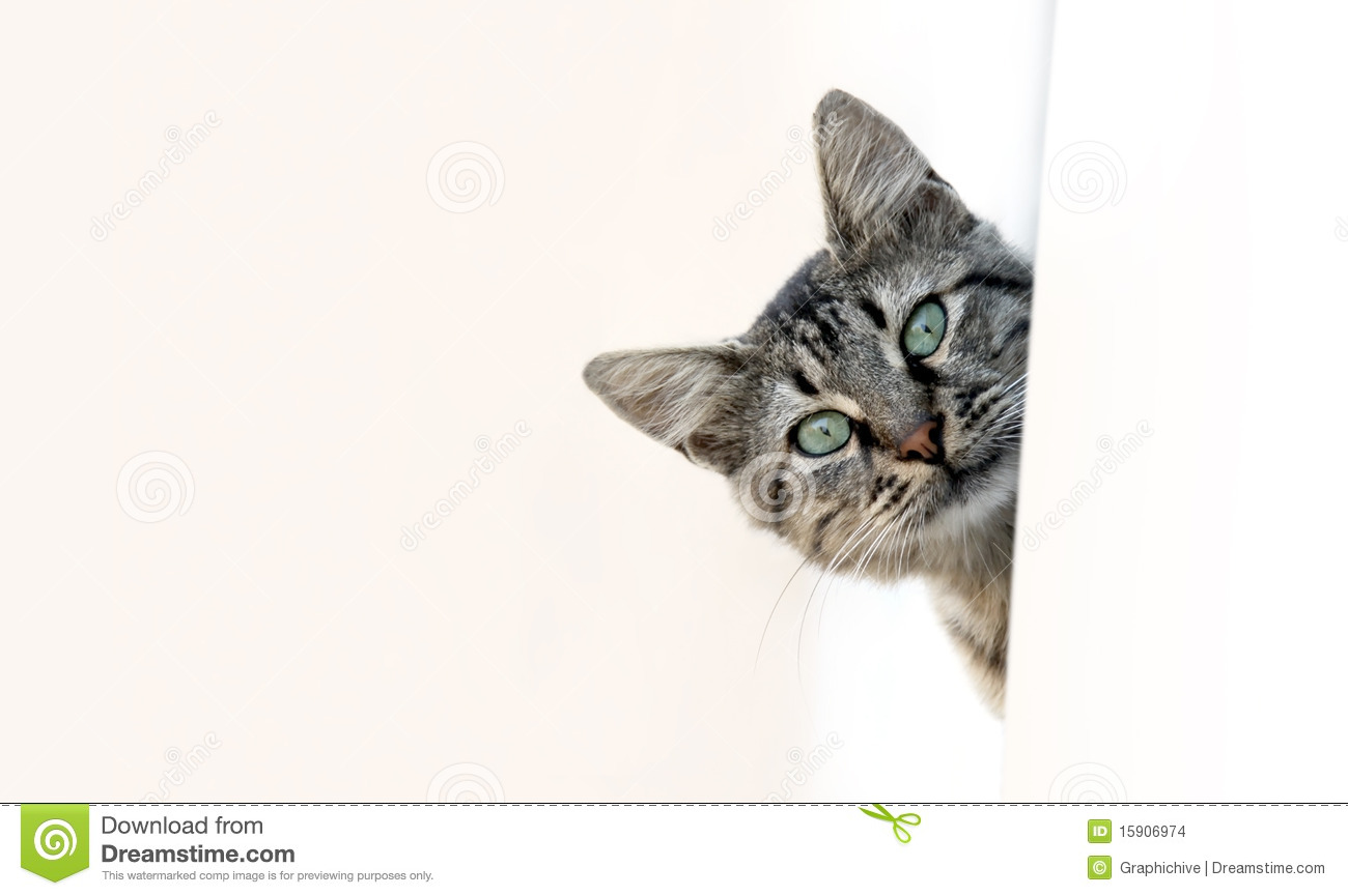 Cat Peeking Stock Images - Image: 15906974