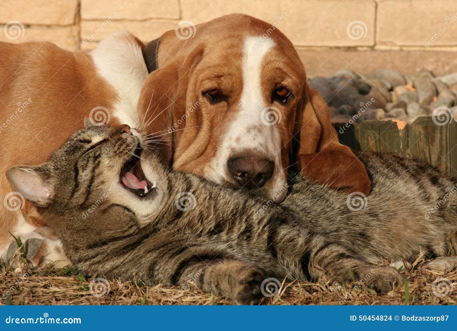 Cat Pillow Dog Blanket Iii Stock Photo Image 50454824