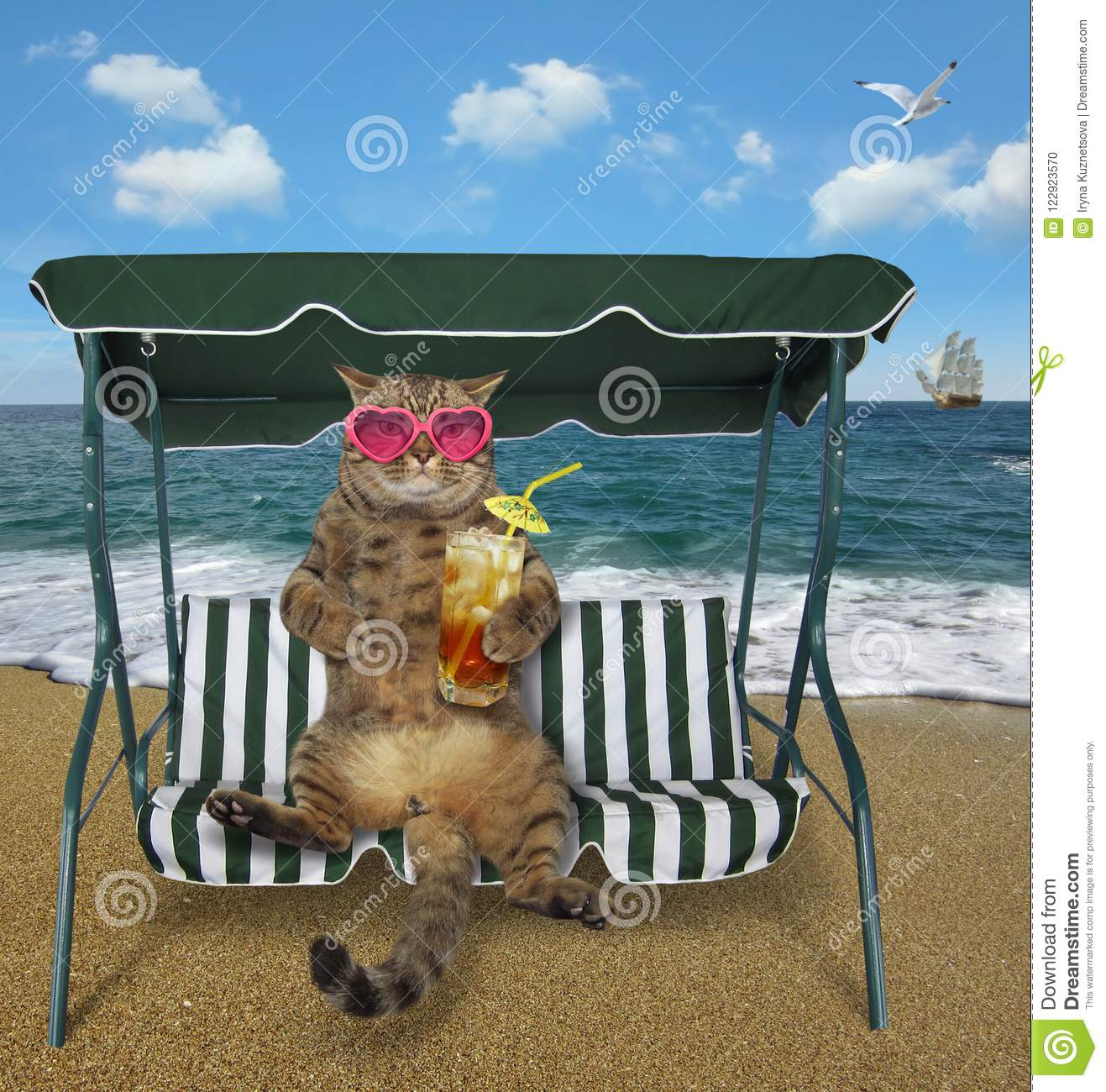 Cat with cold tea sits on a swing bench