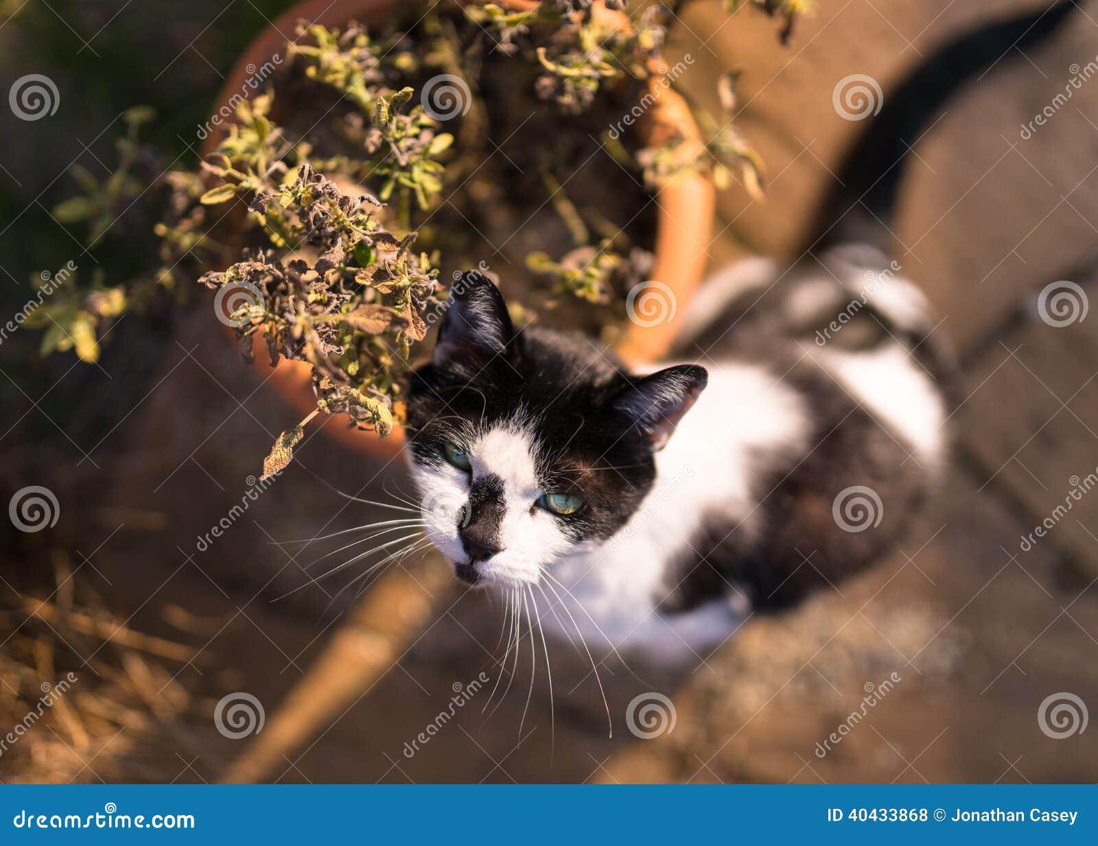 Cat With Plant Pot blanca y negra