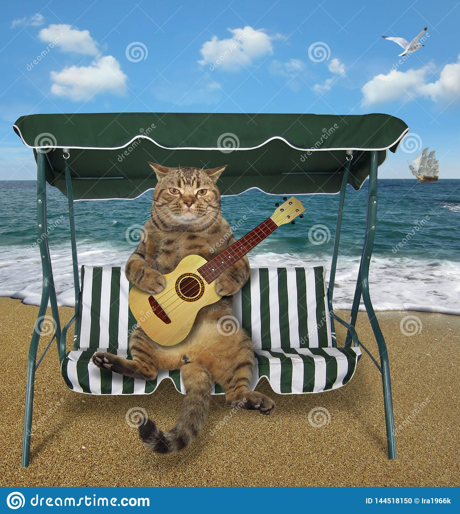 Cat playing the guitar on the beach