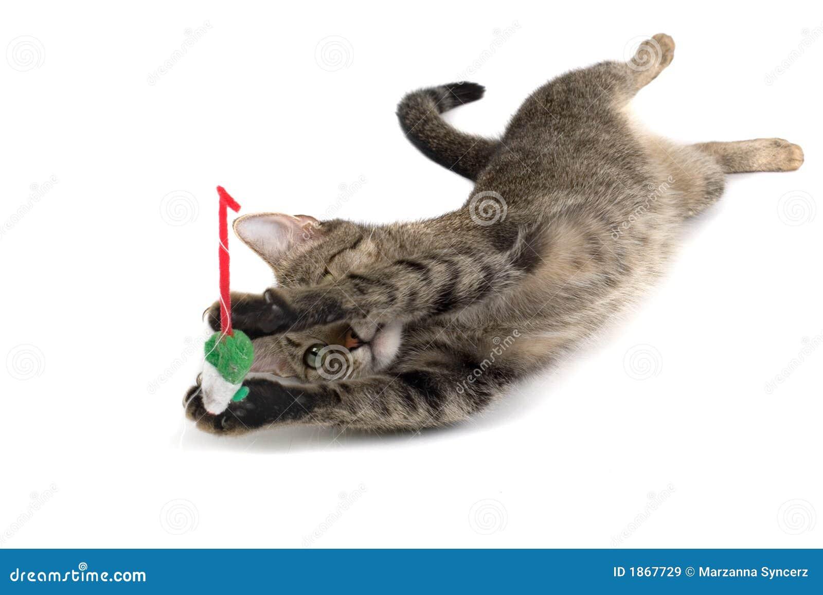 Fake Cat Toy