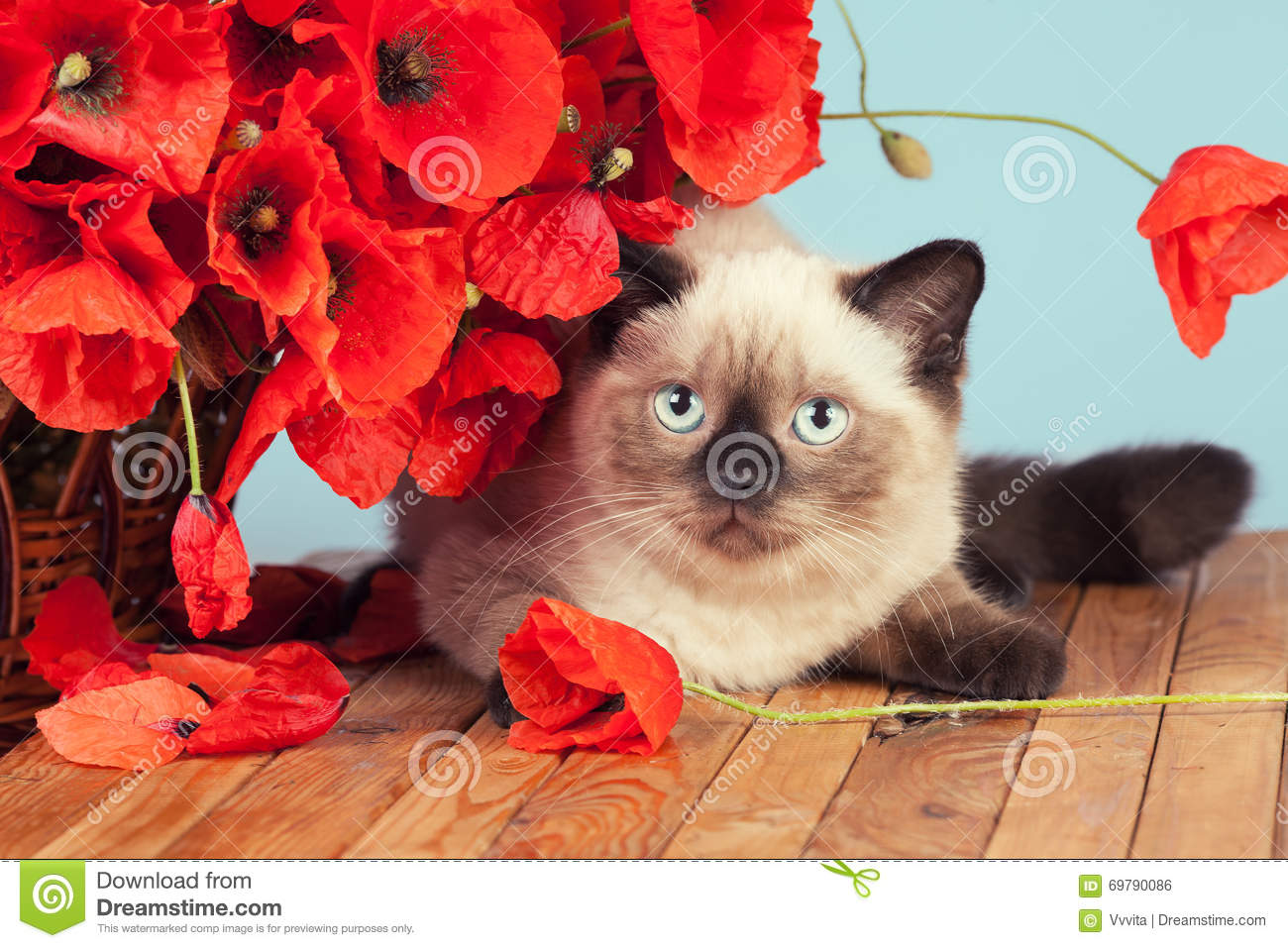 Cat with poppies flowers lying on wooden table
