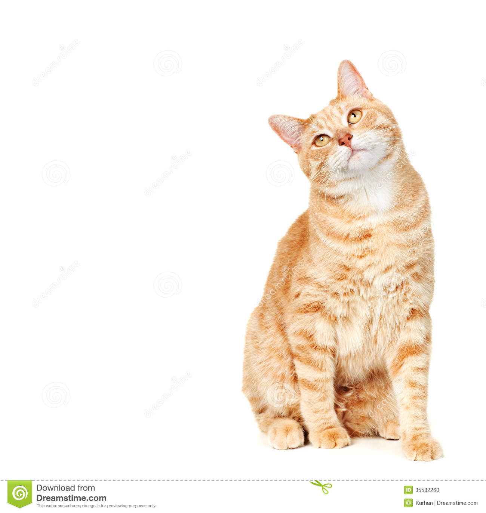 Cat Portrait Stock Photo Image 35582260