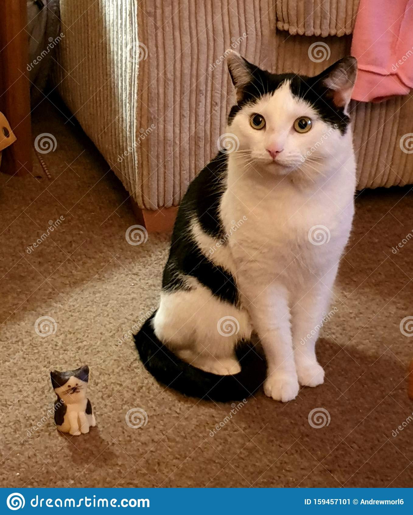 Cat Posing With A Model Cat Stock Image - Image of meow ...