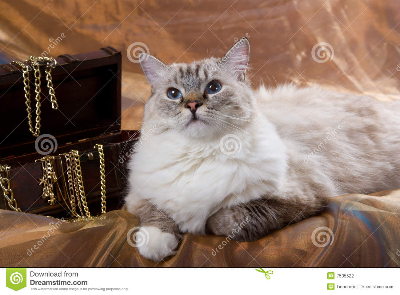 Cat Posing Next To Treasure Chest Stock Photo Image 7535522