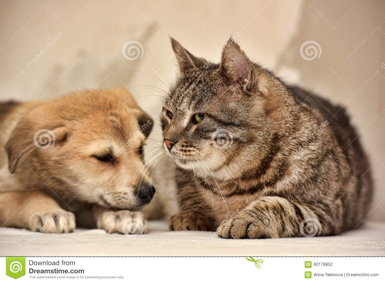 Cat And Puppy Stock Photo Image Of Domestic Color Golden 60178852