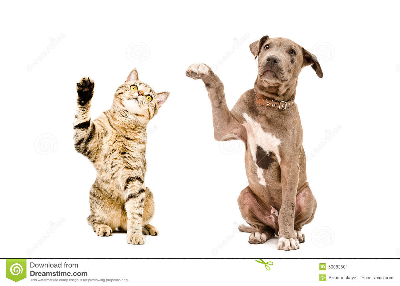 Raising Cats And Dogs Together