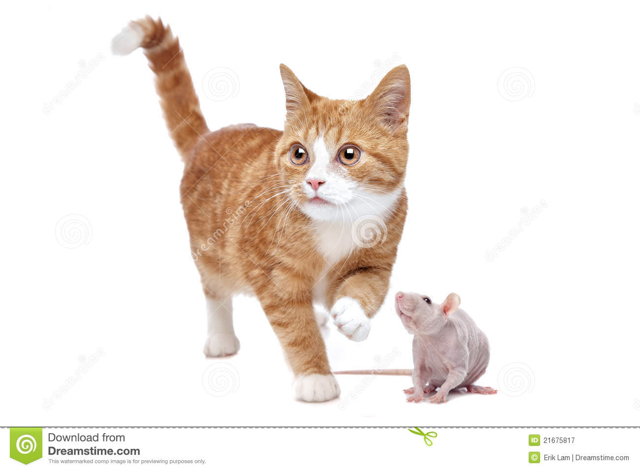cat and rat royalty free stock photography image 21675817 free kitchen clipart free kitchen clipart for oval labels
