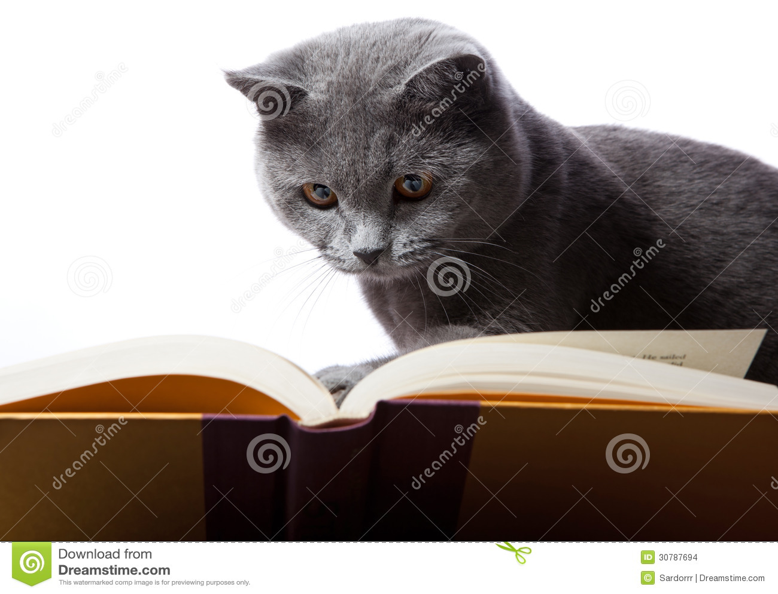 book the guns of normandy a