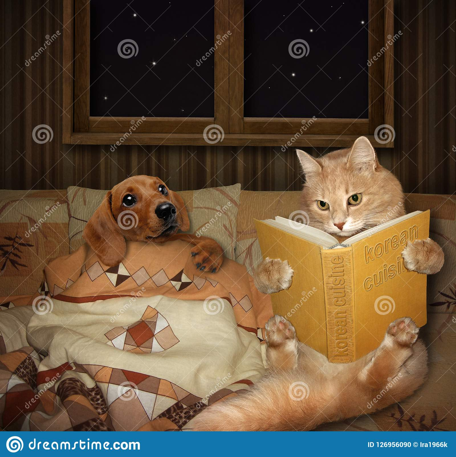 A cat reads tales  stock photo  Image of bedtime, book - 126956090
