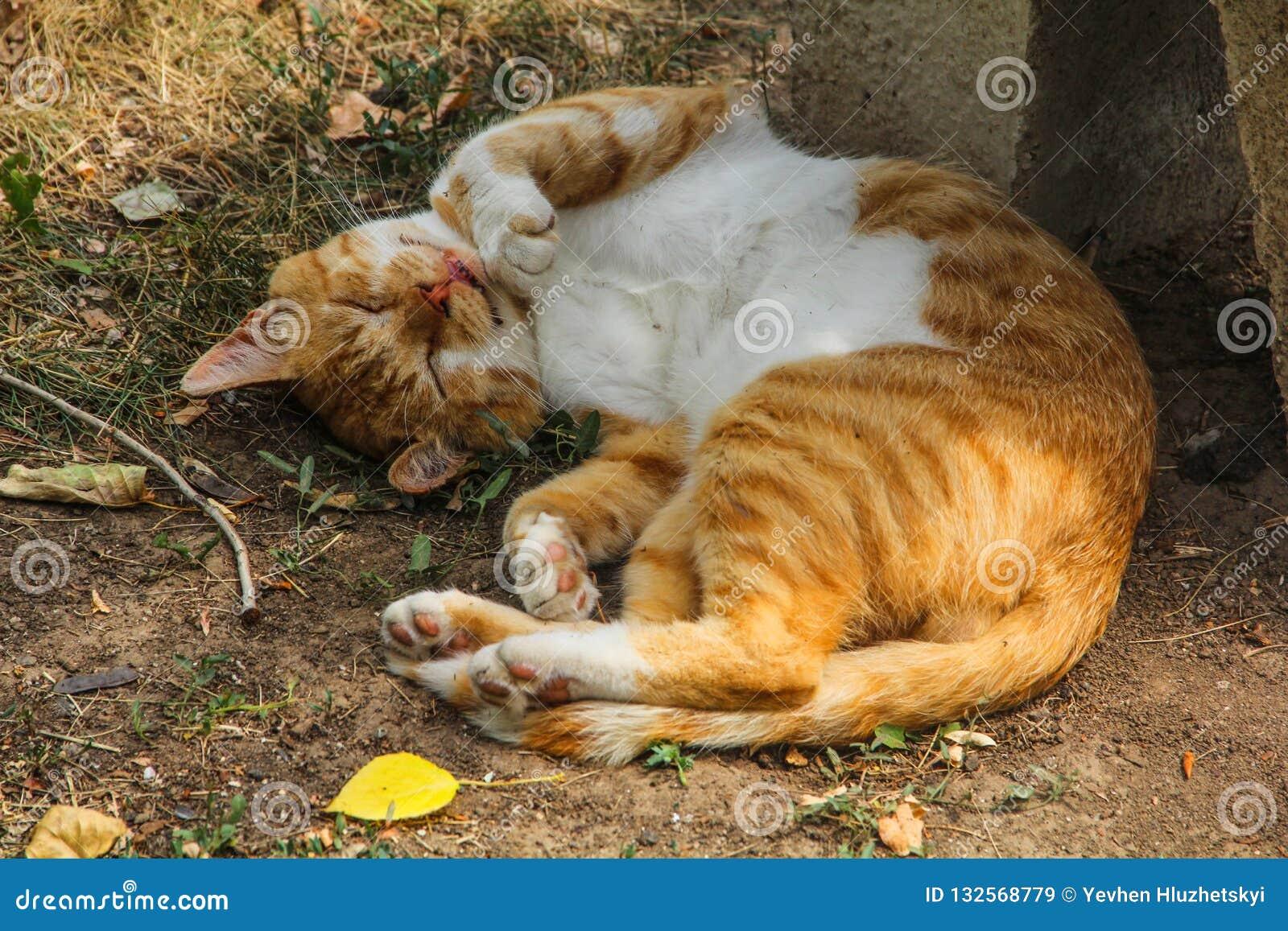 Ginger cat, yard, homeless sleeping in the summer