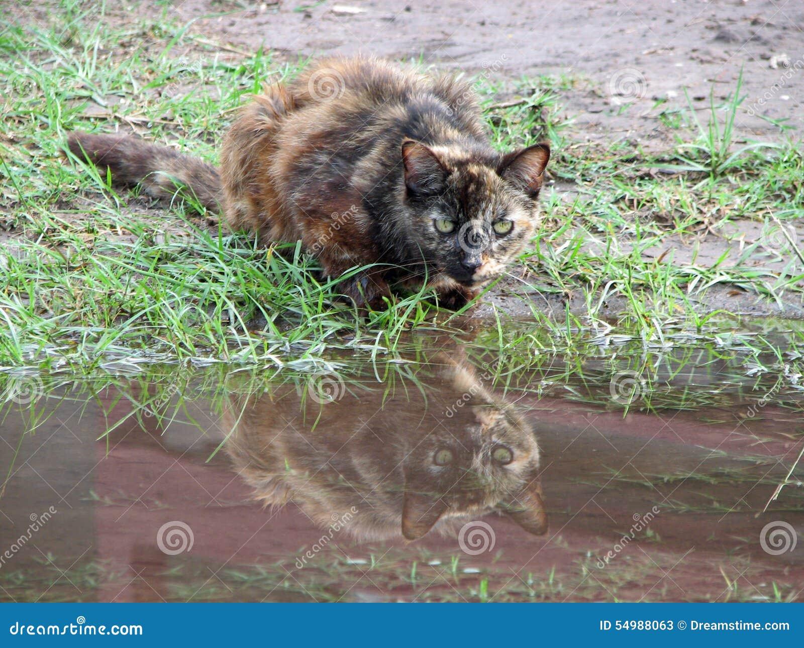 Cat Reflection