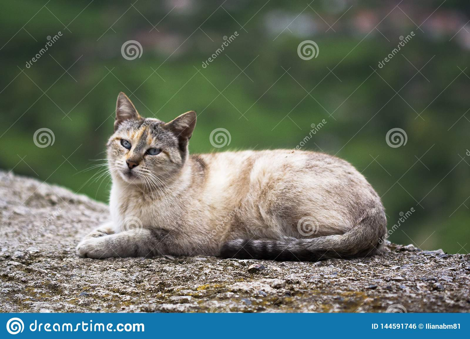 Cat resting on the road