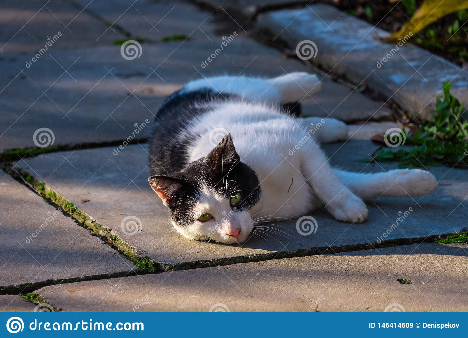 The cat is resting on  street
