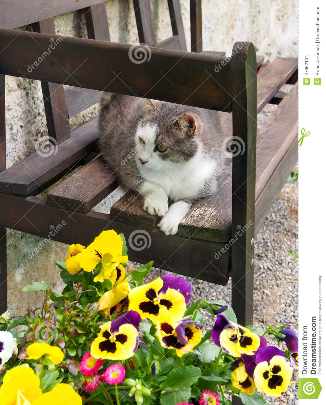 Cat resting on wooden bench
