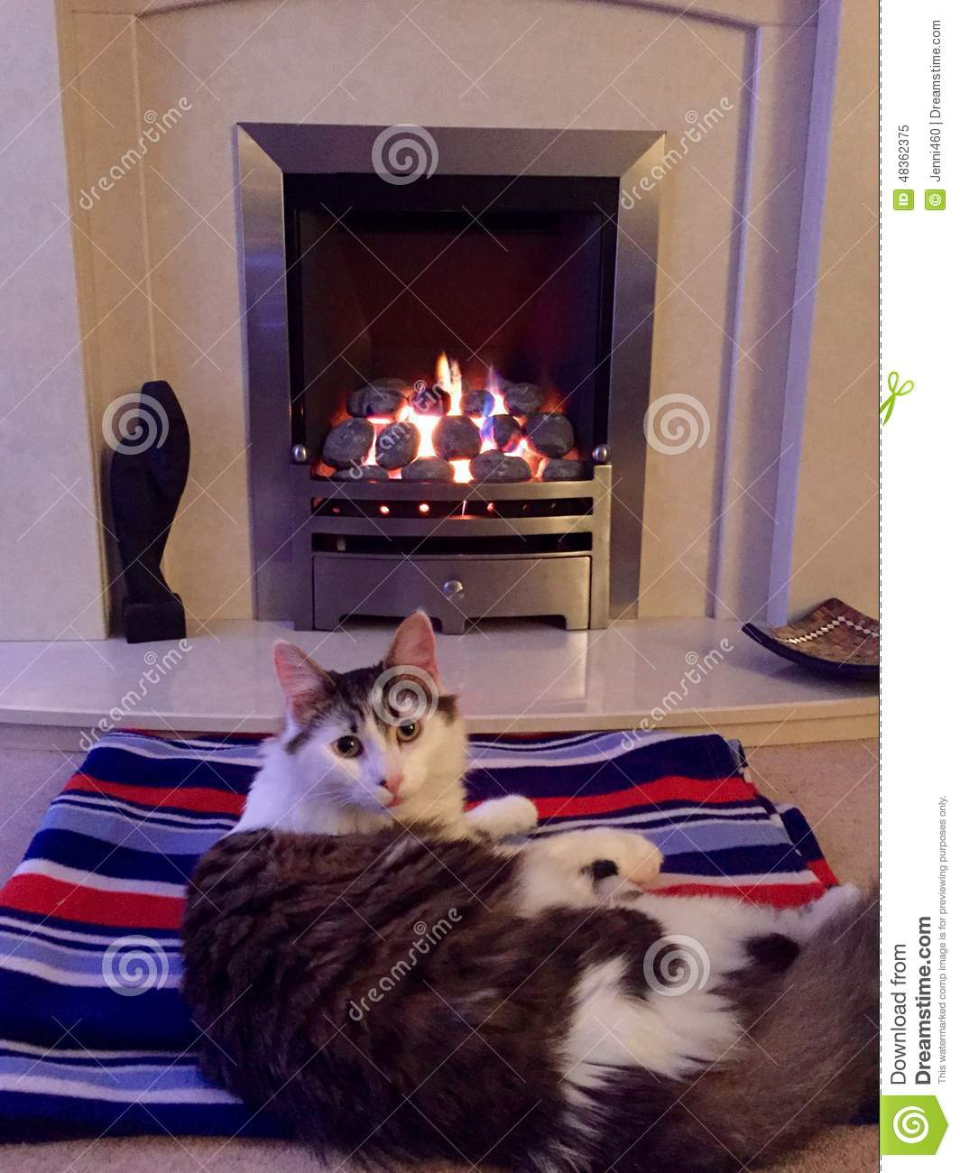 Cat on a rug in front of a fire