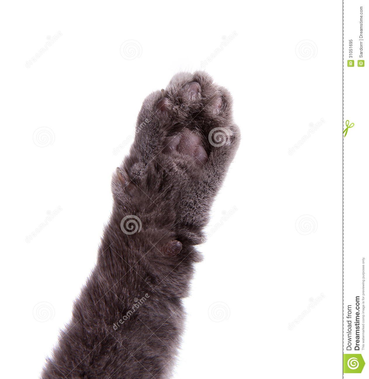 Cat's Arm Raised Paw Royalty Free Stock Photo - Image: 31051695