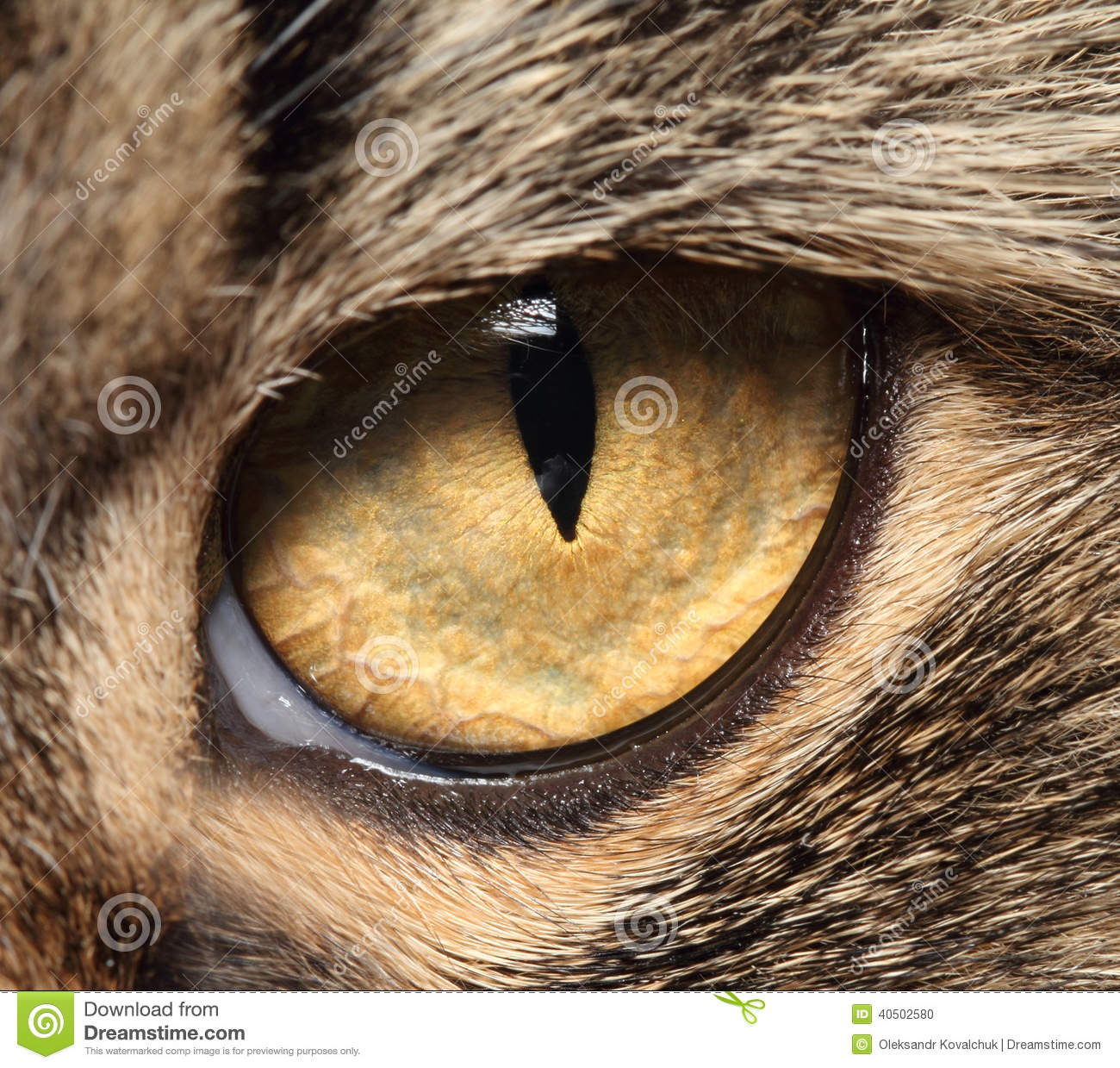 cats eye color