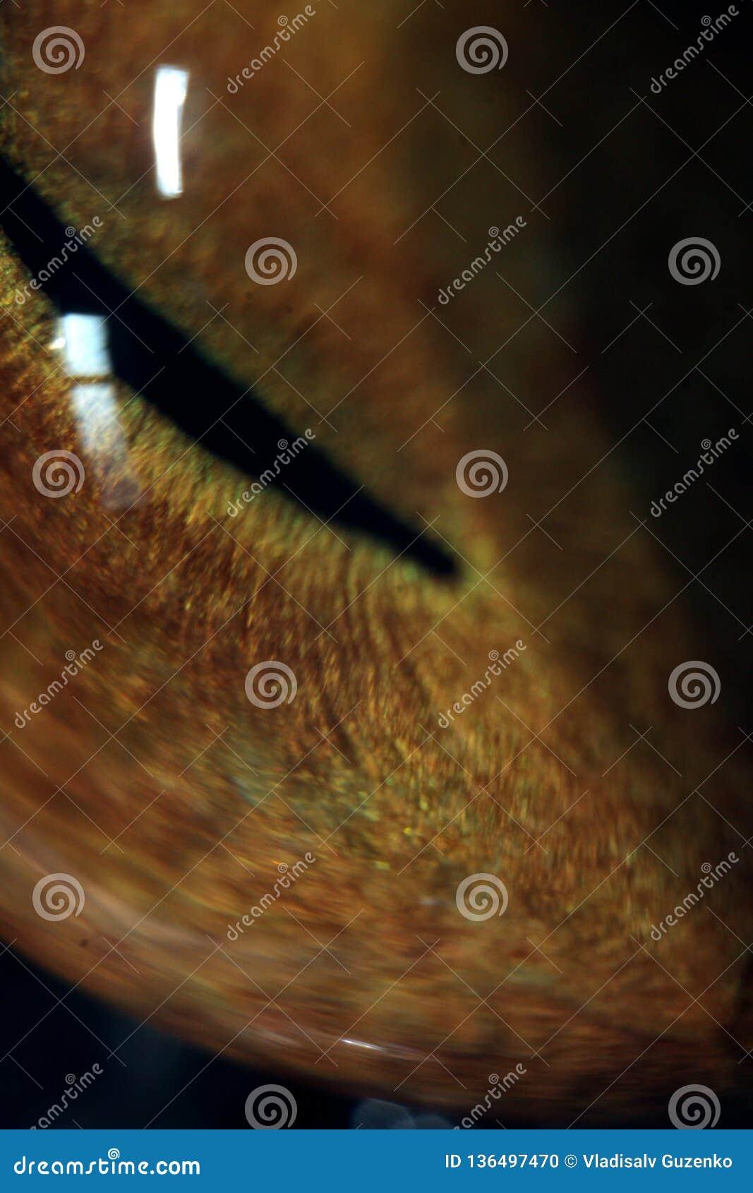 Cat`s eye at maximum magnification macro