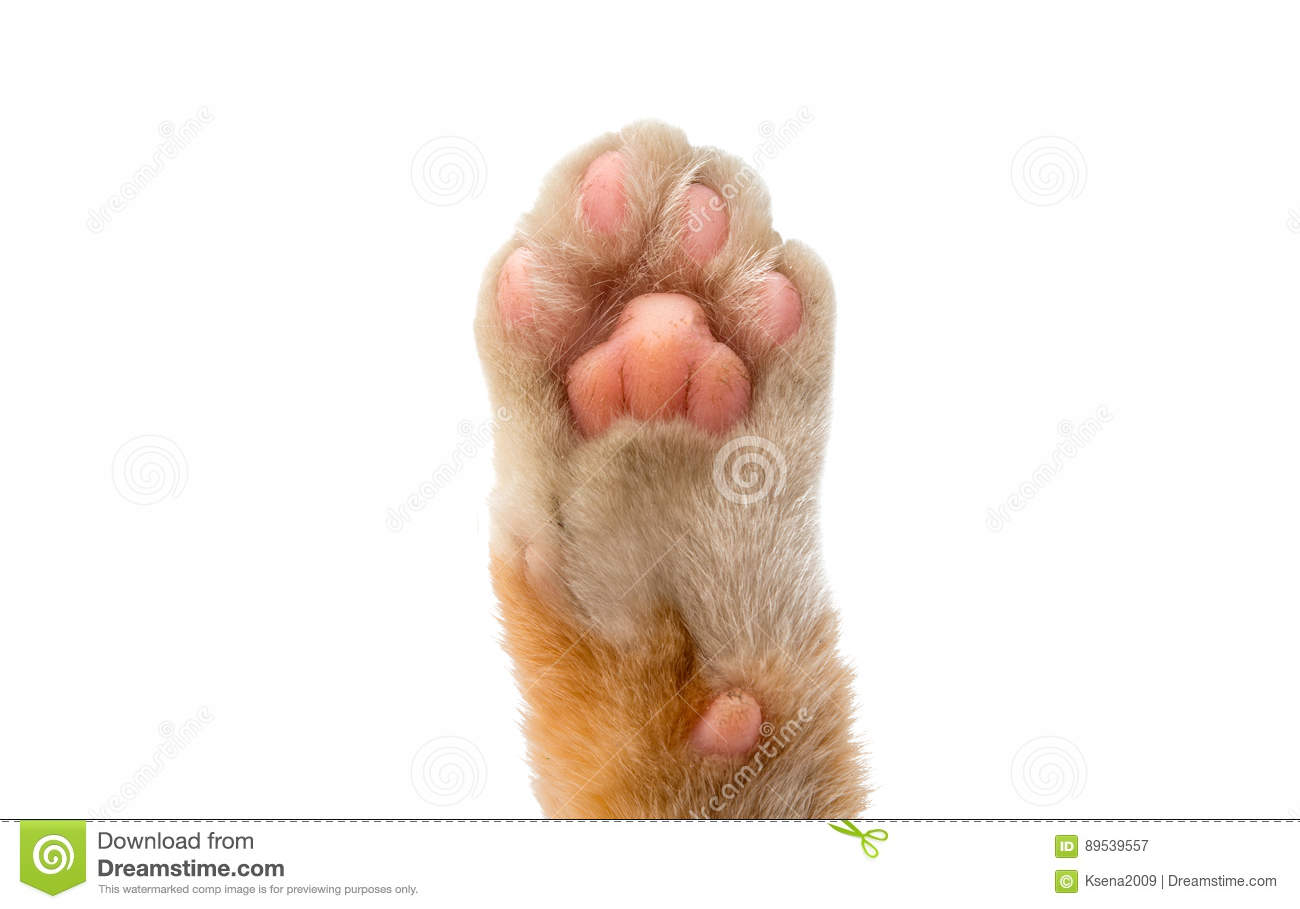 cat s paw isolated