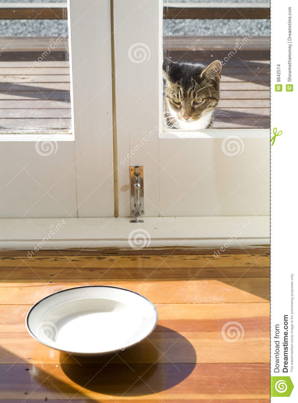Cat And Saucer Of Milk Stock Photo Image Of Dish