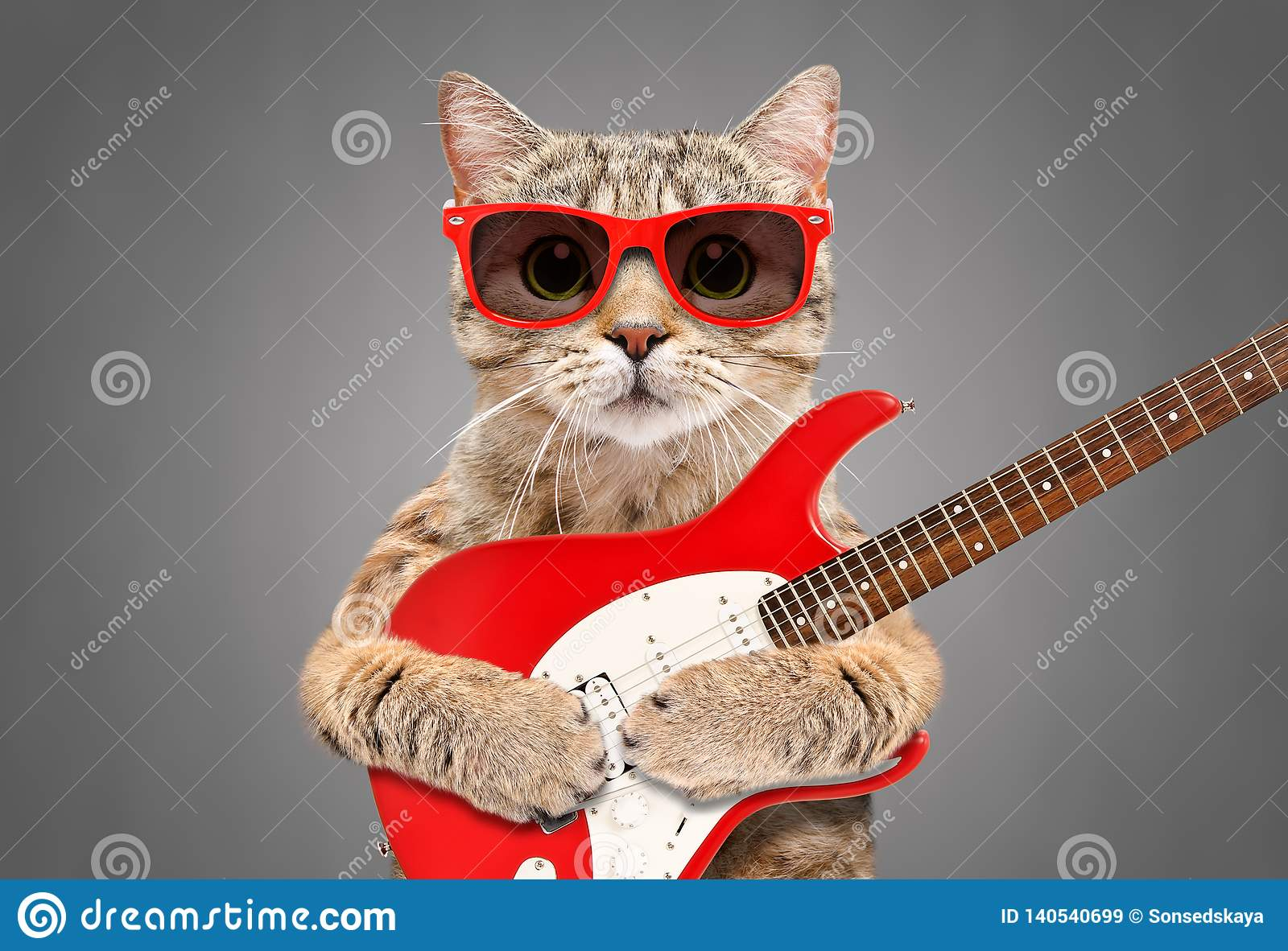 Cat Scottish Straight in der Sonnenbrille mit E-Gitarre