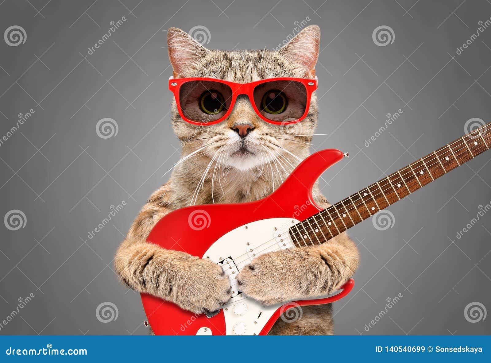 Cat Scottish Straight i solglasögon med den elektriska gitarren